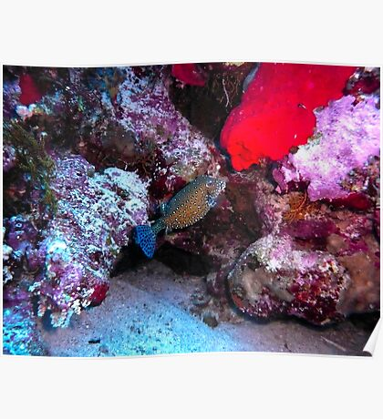Pesce prints redbubble for Pesce rosso butterfly