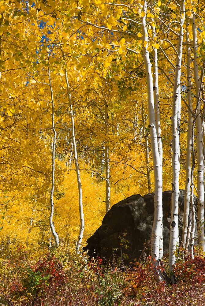 Colorado Fall by Linda J Armstrong