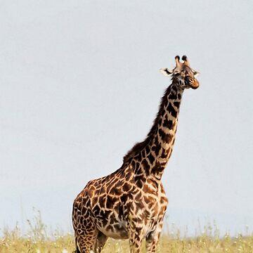 Lone Giraffe by maryloufletcher