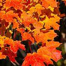 Leaves Extravaganza by debfaraday