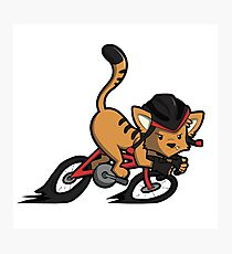 Cycling Cat Photographic Print