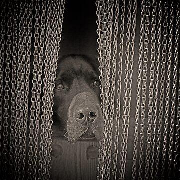 Labrador by SpainBuddy