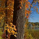 Autumn Colors in Plymouth, MN by Robin Clifton
