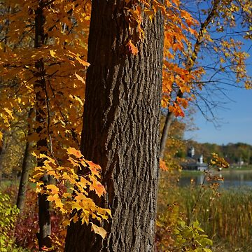 Autumn Colors in Plymouth, MN by robinclifton