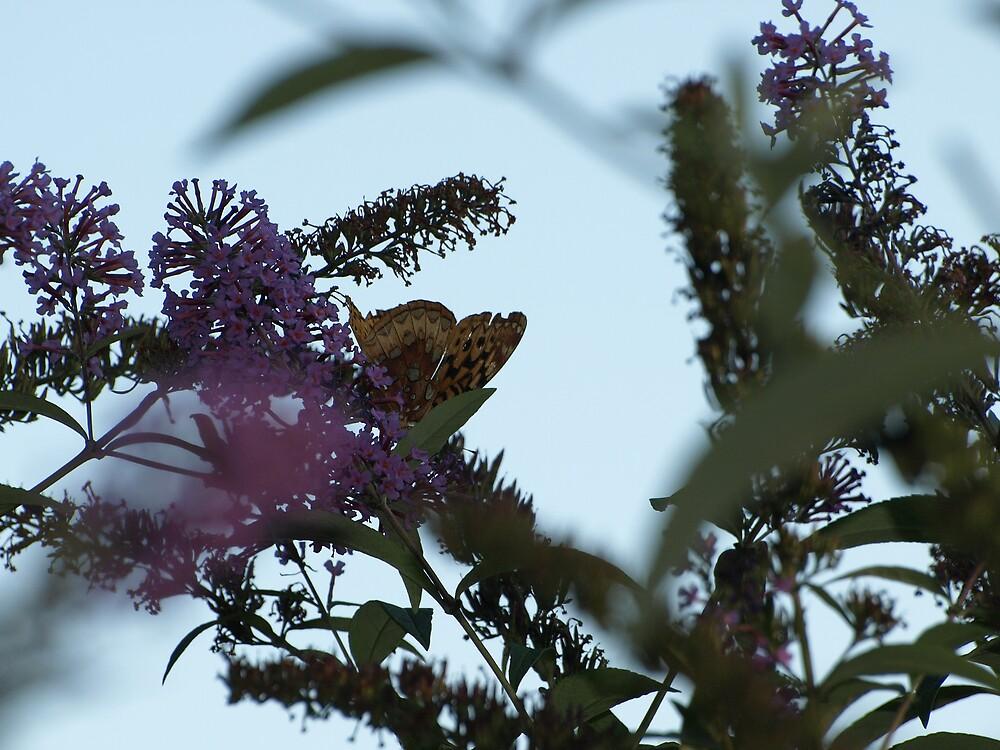 Hidden Butterfly by Mark Dugan