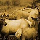 Elks Family Portrait 1 by artsphotoshop