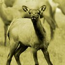 Fawn  by artsphotoshop