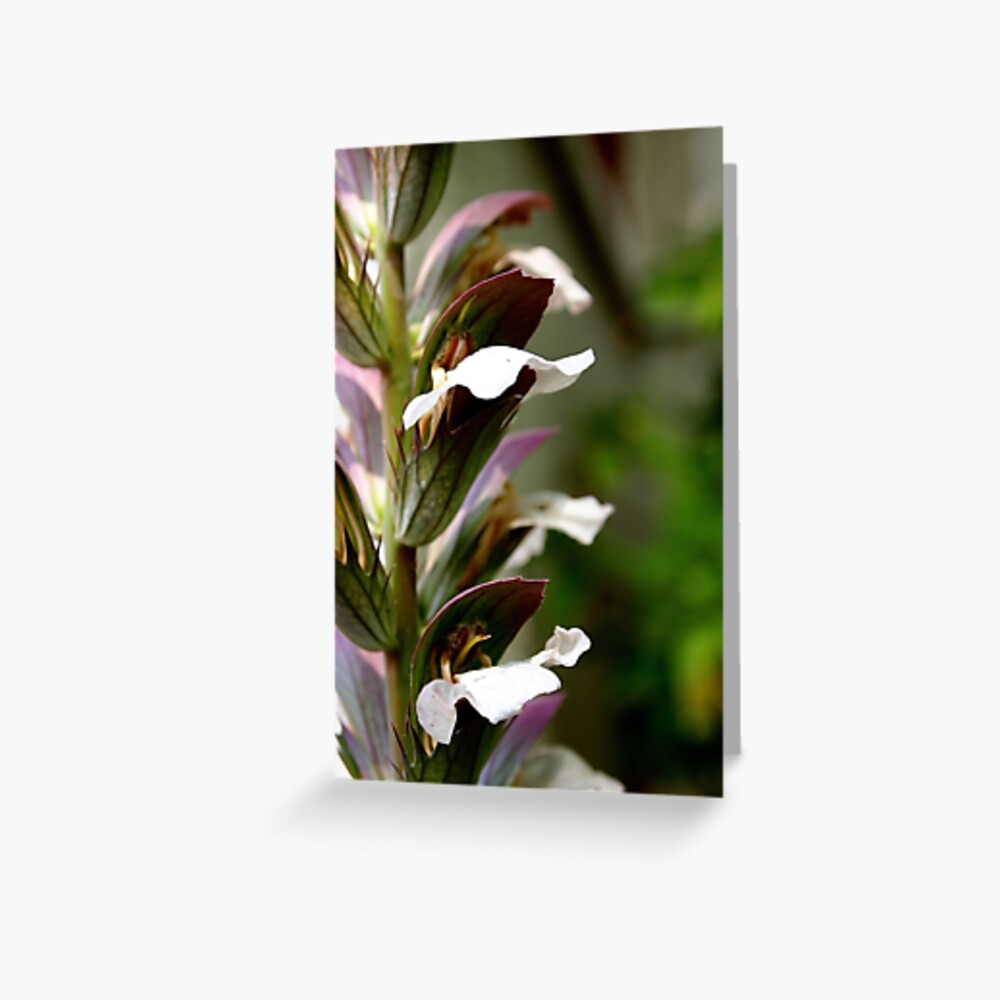 Acanthus from A Gardener's Notebook Greeting Card