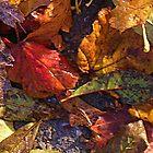 Autumn Carpet by lezvee