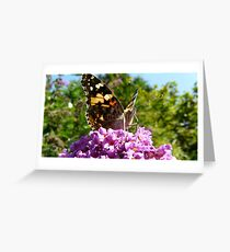Vanessa cardui or Madame Butterfly Greeting Card