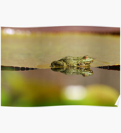 frogs paradies II Poster