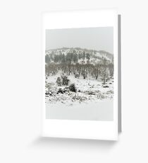 Snowing Forest Greeting Card