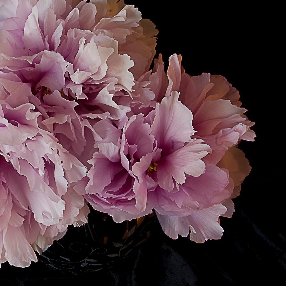 Pink Peony by Sue Wickham