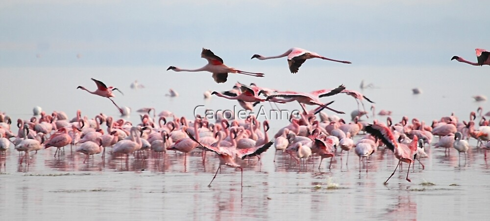 Wading, Dancing & Flying by Carole-Anne