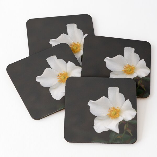 California Winter Rose Coasters (Set of 4)