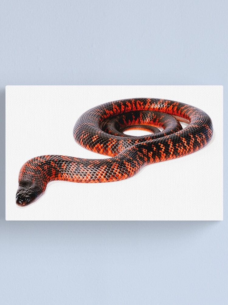 Alternate view of Collett's Snake (Pseudechis colletti) Canvas Print