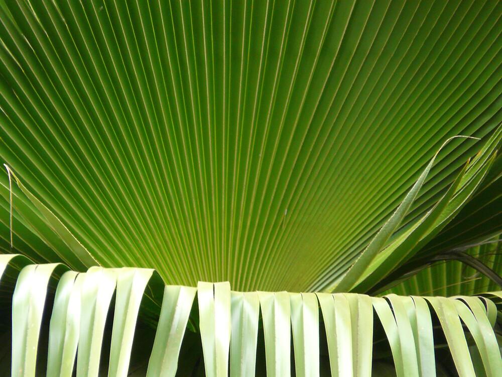 Palm2 by edward turnbull