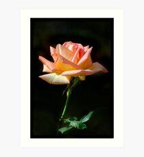 Rose of St James Art Print