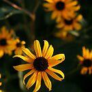Bucks County Pennsylvania Flowers by Bonnie Boden
