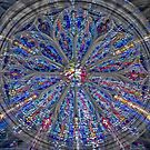 Stained Glass  by Laura Cardello