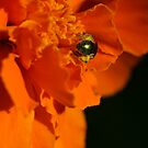 Bucks County Pennsylvania Insects by Bonnie Boden