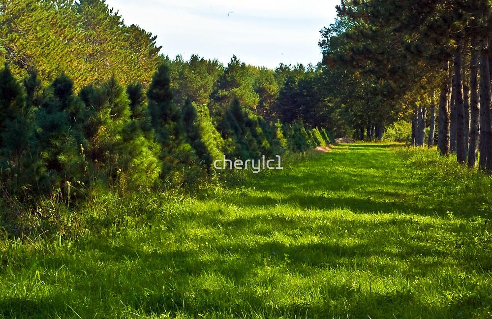 The Tree Farm by cherylc1