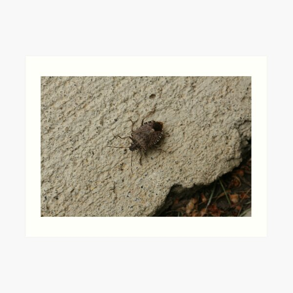 Stinkbug (I Didn't Know That's What It Was) Catch and Release Art Print