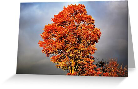 Explosion of Color by Laurie Minor