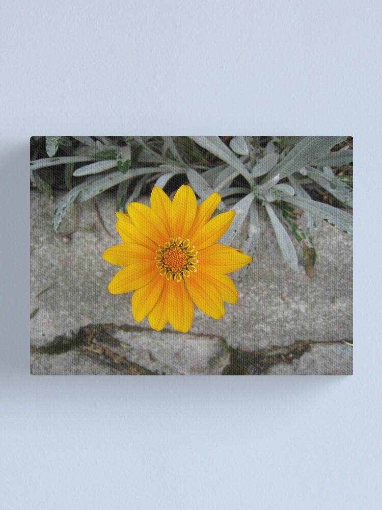 Alternate view of Hello, Beautiful Canvas Print