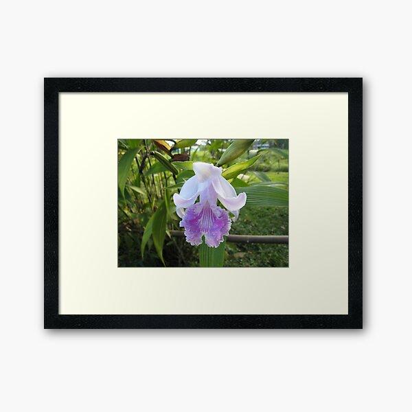Jungle Orchid Framed Art Print