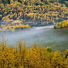 Autumn Fog by peaceofthenorth