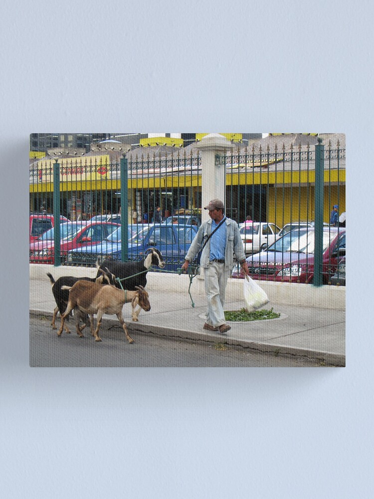 Alternate view of City Goats Canvas Print