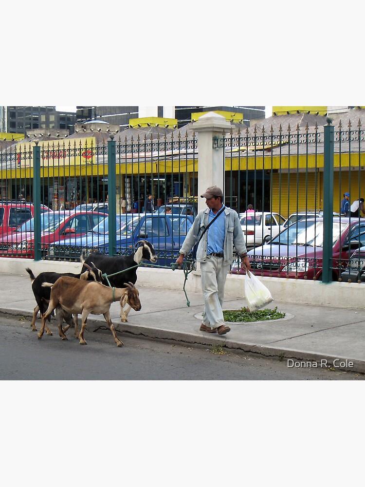 City Goats by alwaysdrc