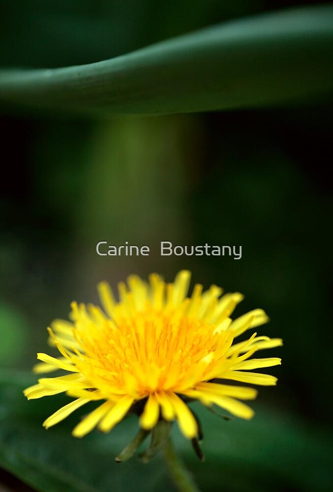 Sunshine by Carine  Boustany