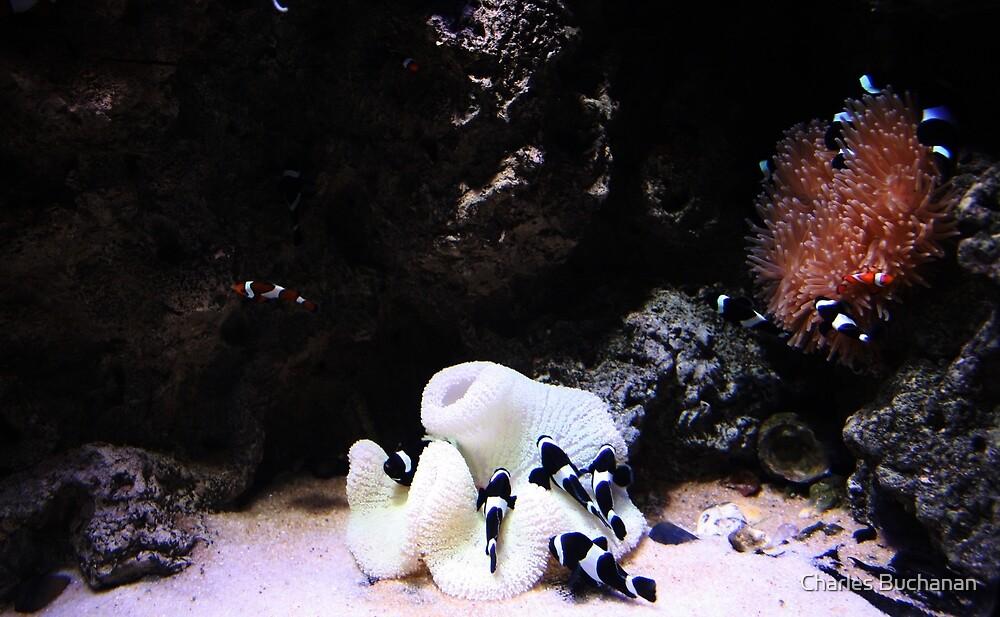 Black and White by Charles Buchanan