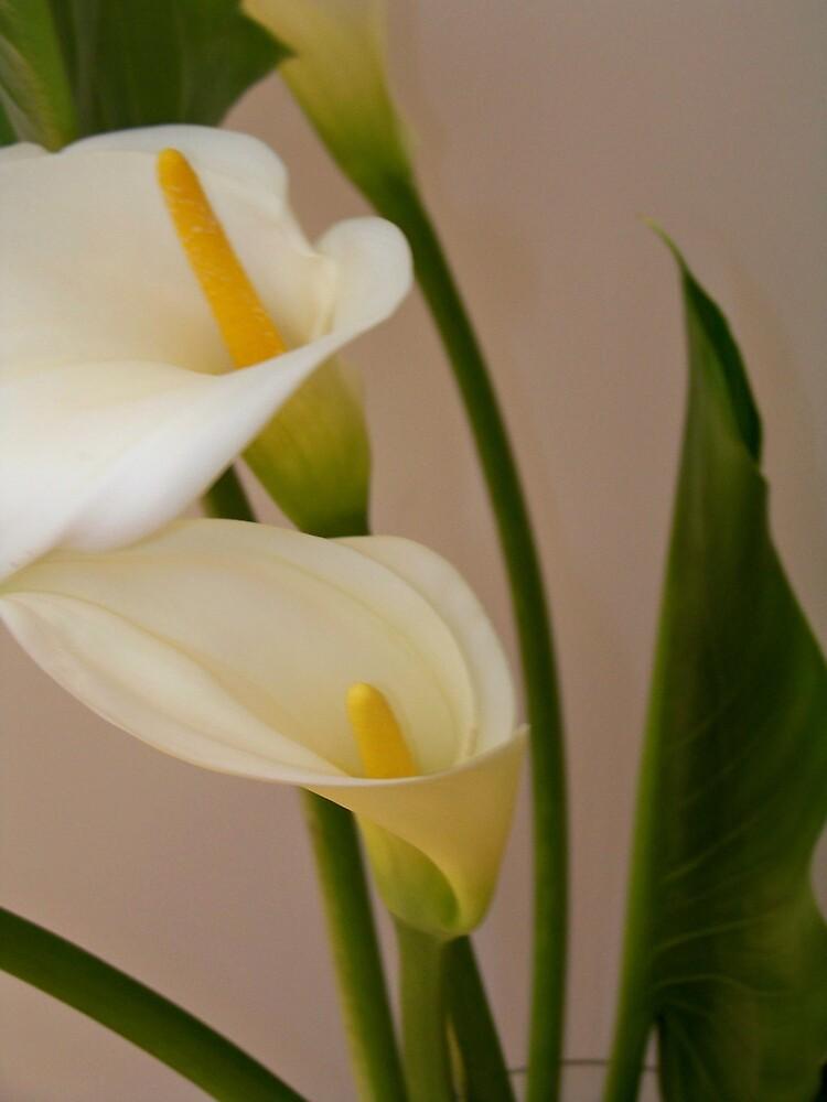 Soft White Twins by Abbey Bolton