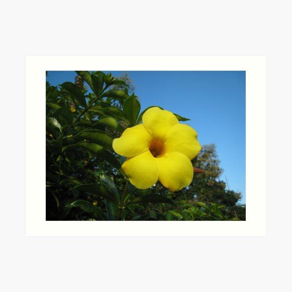 Yellow Happiness Art Print