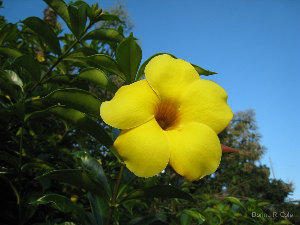 Yellow Happiness by Donna R. Cole