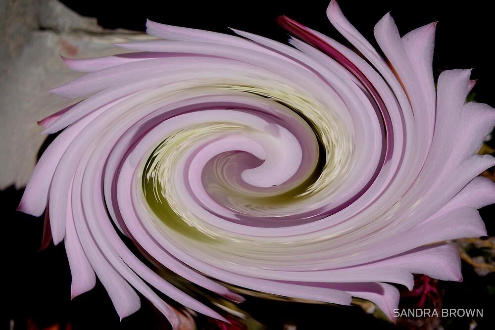 PINK SWIRL DIGITAL ART by SANDRA BROWN