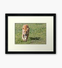 Lioness (Panthera leo massaica) Framed Print