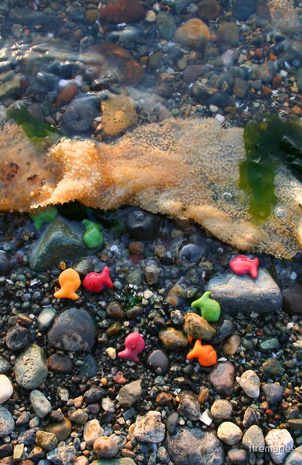 Rainbow Fish by firemarie