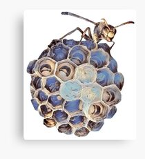 Australian Paper Wasp and her babies Canvas Print