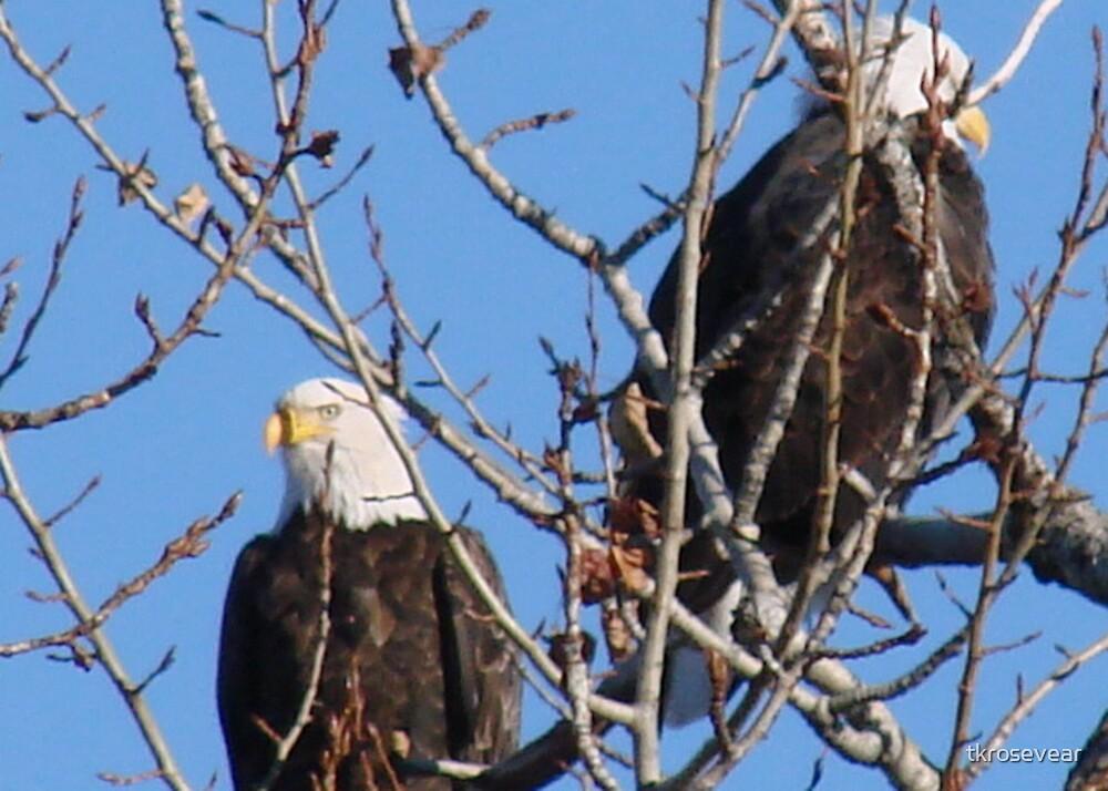 Two Eagles by tkrosevear