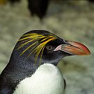 Profile of a Penguin by Kristin Hamm