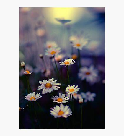 Urban daisies, Tokyo, Japan Photographic Print