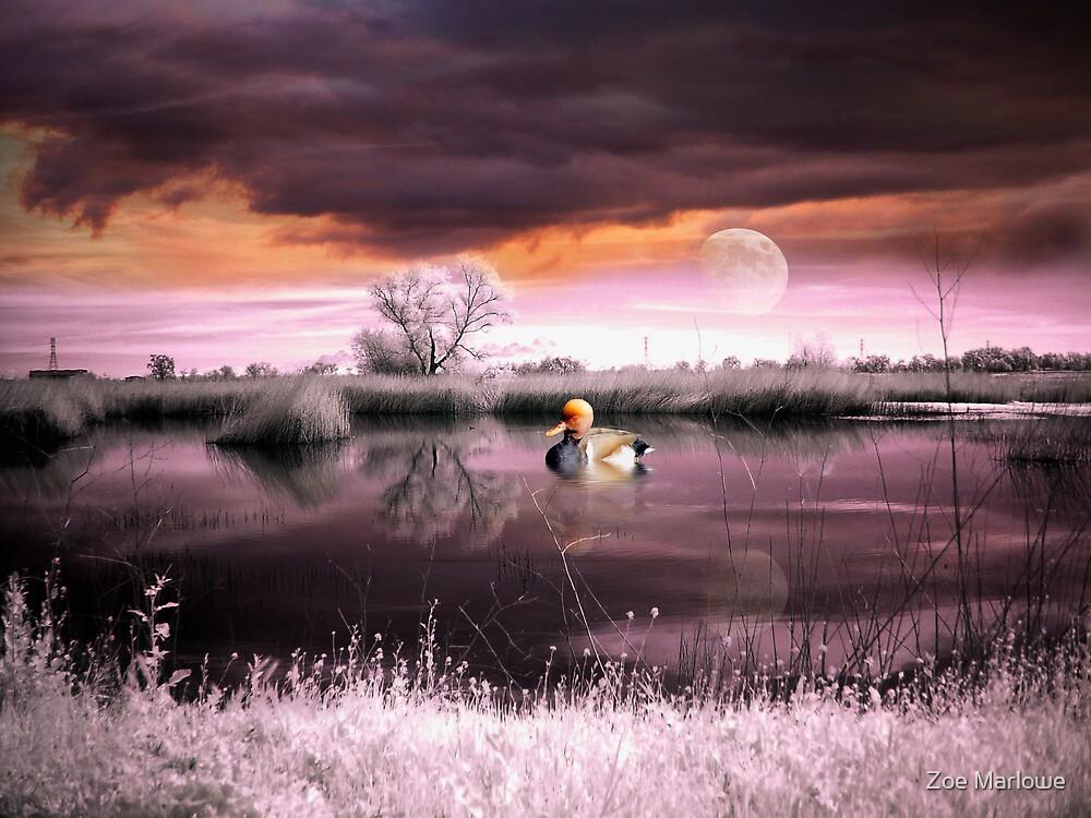 Splendid Winter Skies by Zoe Marlowe