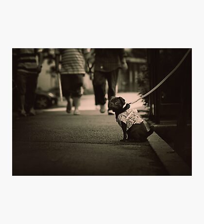 Cute dog with attitude, Tokyo, Japan Photographic Print