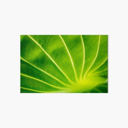 Vivid Green Tropical Leaf Art Board Print