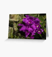 Freshly Watered Violet Orchids Greeting Card