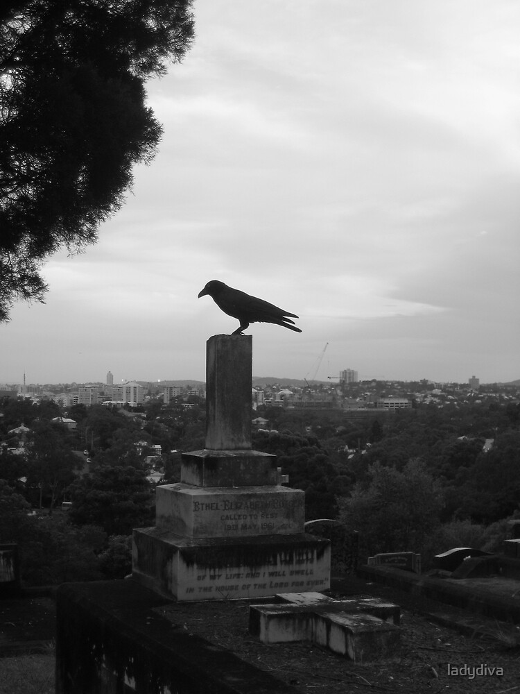 Crow in a Graveyard by ladydiva